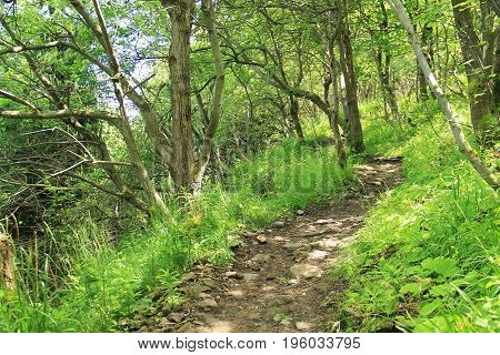 path for tourists leading among the green trees on the Smrk Hill, Beskydy mountains, Czech Republic