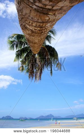 Palm Tree on a beach in El Nido Philippines