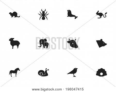 Set Of 12 Editable Animal Icons. Includes Symbols Such As Lamb, Bull, Conch And More