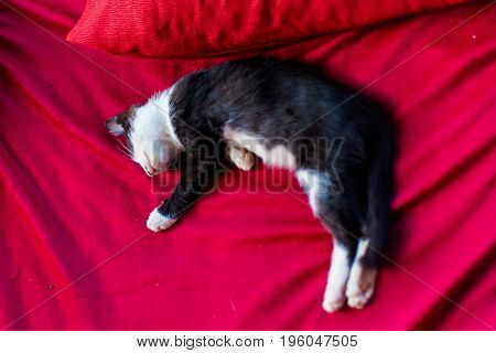 Lazy Cat On Don Det