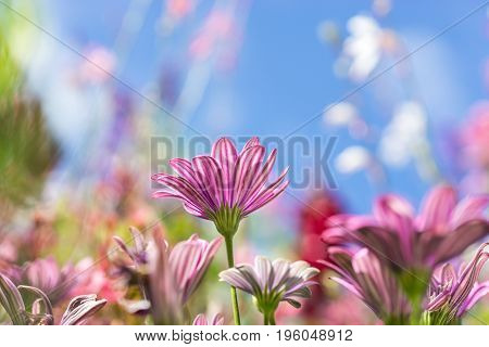 Greeting Card with colorful flower meadow, beautiful summer flowers. Pink purple.