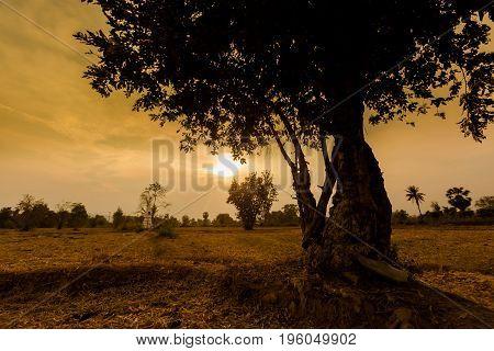 Landscape Of Don Det Laos