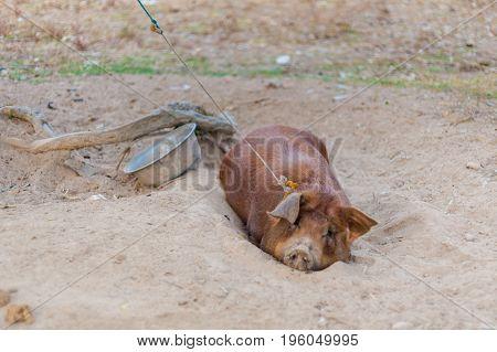 Pig Raising On Don Det