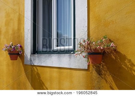 White window and flower vases on a yellow wall