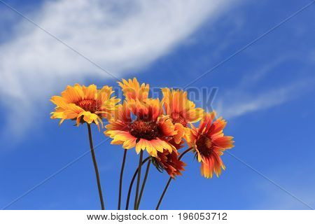 nice bunch of flowers on sky background