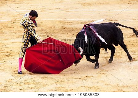 Spanish bullfight, bullfight. The enraged bull attacks the bullfighter. Spain 2017 07.25.2017. Vinaros Monumental Corrida de toros. Juan Jose Padilla.