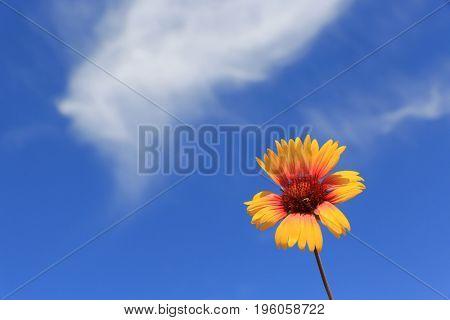 nice summer wild flower over sky background