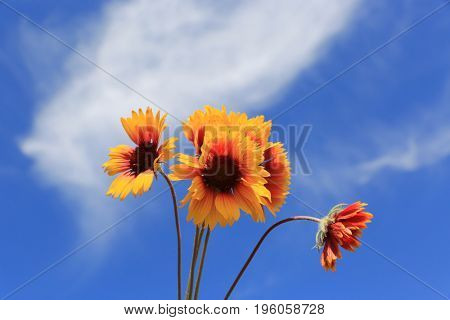 nice wild flower's bunch over sky background in summer time