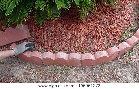 A man with work gloves presses curved scalloped red landscape edging into place as part of a border for a flower and sago palm bed filled with mulch.