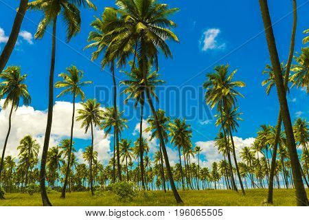 Beautiful palm trees, summer time
