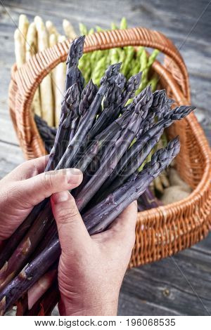 Fresh purple asparagus as close-up in hands of a man above a basket