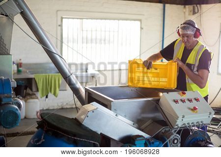 Worker processing olives in machine at factory