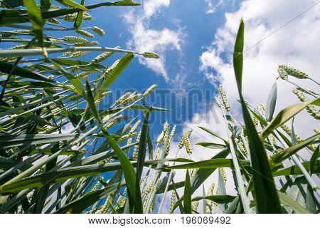Grass view below