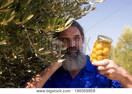 Man talking on mobile phone while examining pickled olive in farm