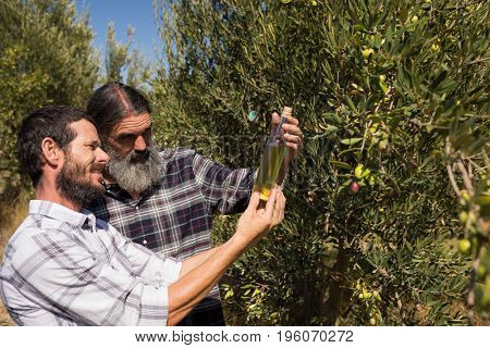 Friends examining olive oil in farm on a sunny day
