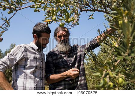 Friends interacting while examining olive on plant in farm