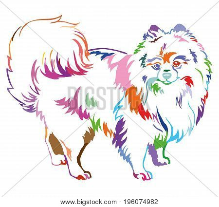 Decorative portrait of standing in profile dog breed Spitz (Pomeranian) vector isolated illustration in different colors on white background