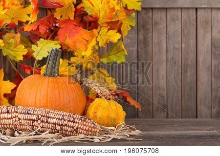 Autumn corn and gourds with colorful leaves on a wood background