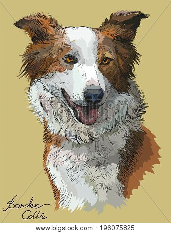 Border collie vector hand drawing illustration in different color on beige background