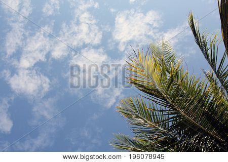 Leaf and clear sky view in Thailand