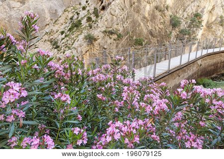 Flowers at the hiking trail 'El Caminito del Rey' - King's Little Path Ardales Malaga province Spain