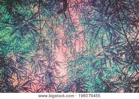 Artistic natural background with plants and bamboo trees