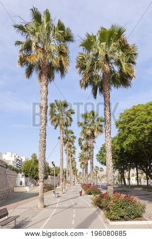 Palm trees at the promenade of Cartagena. Province of Murcia Spain poster