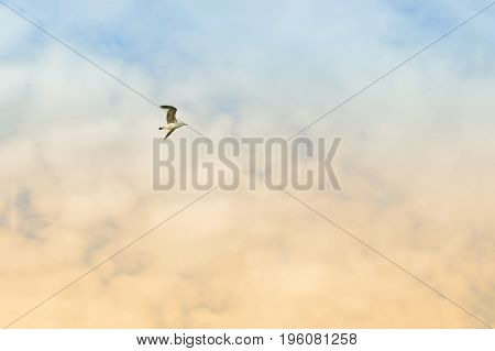 Flight Of Bird. The Seagull Is Flying In The Sky With Blue And Pink Tones. The Concept Of Freedom An