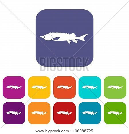 Fresh sturgeon fish icons set vector illustration in flat style in colors red, blue, green, and other