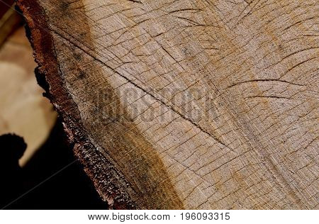 Rough grooves and cuts show on the oak log's section.