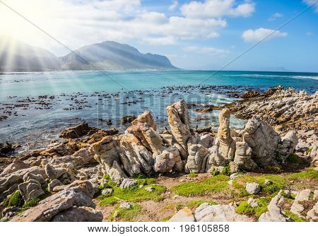 Surroundings of Cape Town. The sun illuminates penguins in Boulders Penguin Colony National Park. South Africa. The concept of  ecotourism