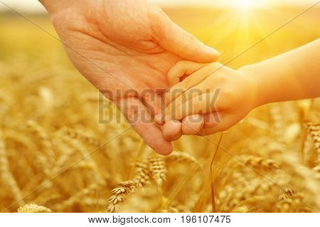 Hands of father and daughter on sun. Holding each other on wheat field