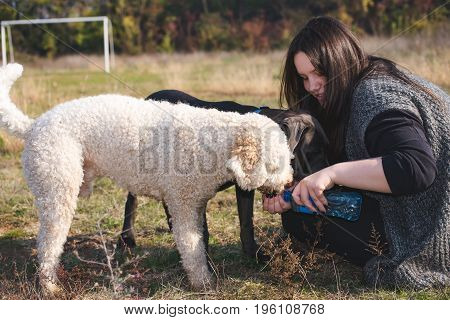 Watering the dogs after a hard training