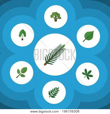 Flat Icon Nature Set Of Acacia Leaf, Foliage, Maple And Other Vector Objects