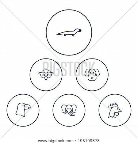 Set Of 6 Animal Outline Icons Set