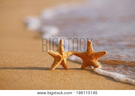 red starfish on sand beach with wave and ocean , shallow dof