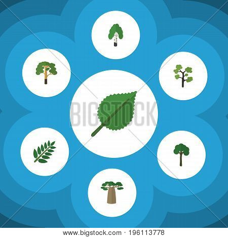Flat Icon Ecology Set Of Baobab, Timber, Linden And Other Vector Objects