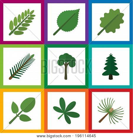 Flat Icon Natural Set Of Evergreen, Park, Alder And Other Vector Objects