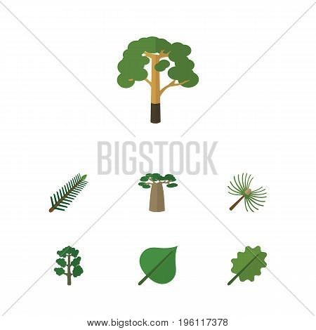 Flat Icon Nature Set Of Alder, Hickory, Wood And Other Vector Objects