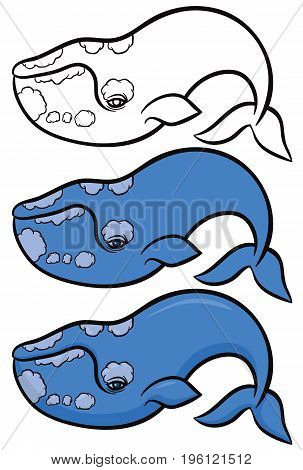 bowhead or greenland whale - set of vector illustrations