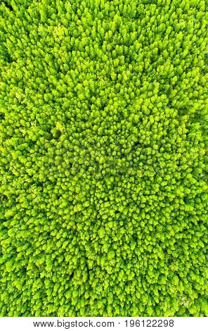 top view tree beautiful background aerial view mangrove forest Natural grass textureblurred