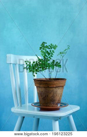 fern in the vintage pot