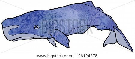 Big blue sperm whale with a beautiful watercolor texture vector illustration