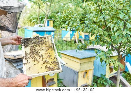 Cropped shot of a beekeeper holding honeycomb with bees beehives on the background working honey natural organic farming lifestyle concept copyspace.