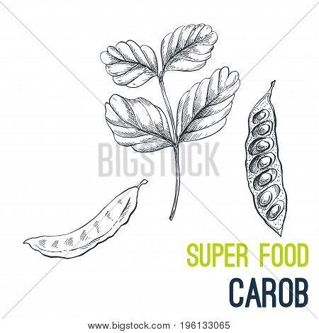 Carob. Super food hand drawn sketch vector illustration.