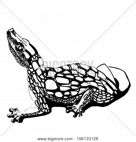 Crocodile. Picture of an alligator with one line. Alligator is free of background. Stylish crocodile print.