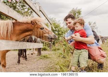 Toddler Boy And His Father Feeding A Pony At Farm