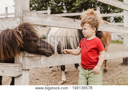 Toddler boy pointing his finger at pony horse at animal farm. Outdoor fun for kids. Child try to touch pony's nose