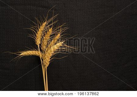 five cirn grain spike on background texture