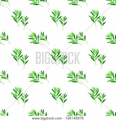 Seamless Background Image Colorful Vegetable Food Ingredient Rosemary